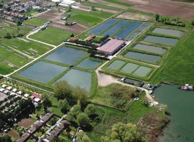 Centri ittiogenici regione umbria for Vasche per allevamento ittico